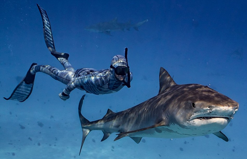 圖說黑科技:讓海洋生物難以擦覺的隱身潛水服